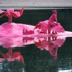 spectacle sur l'eau-water show-spectacle aquatique-aquatic show